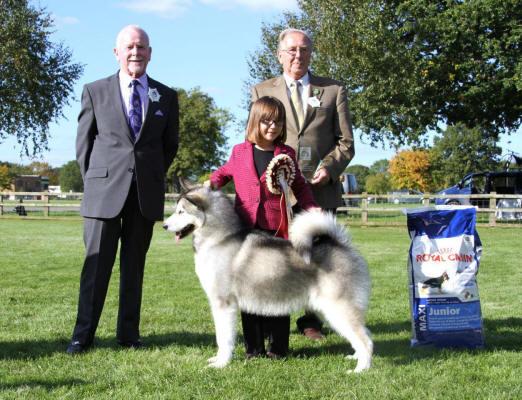 Darlington Championship Dog Show